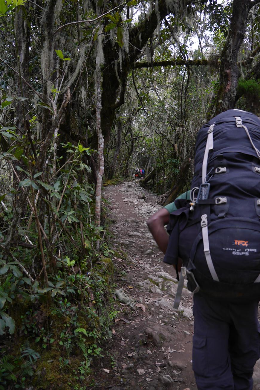 Renan sur les sentiers du Kilimanjaro