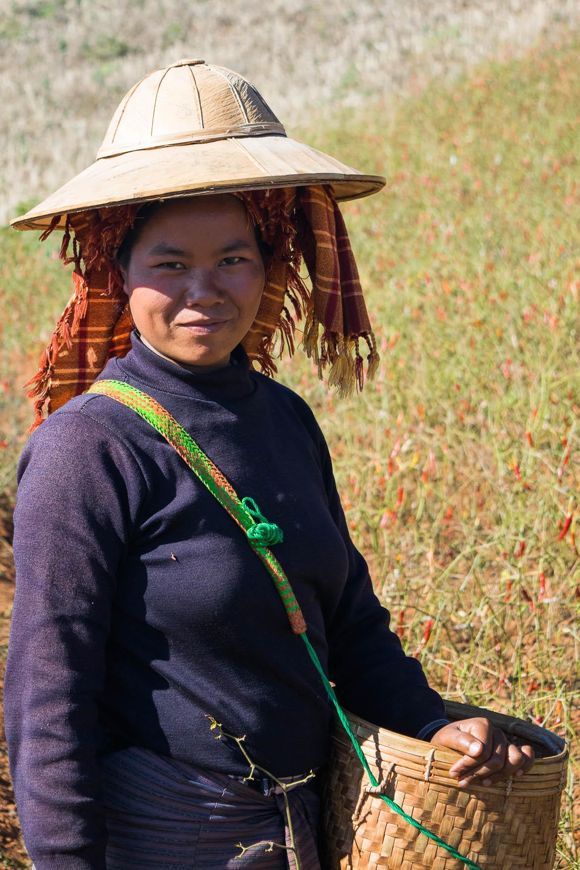 Birmane travaillant dans les champs de piment
