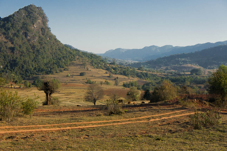 Rizières sur le chemin du trek entre Kalaw et Inle