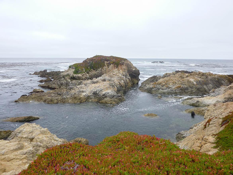 17 Mile Drive : Oui le point noir est un éléphant de mer!