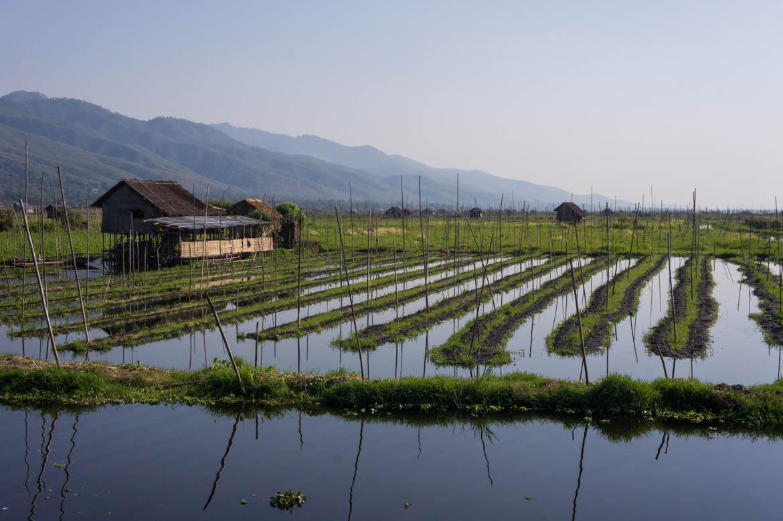 Jardins flottants sur le Lac Inlé