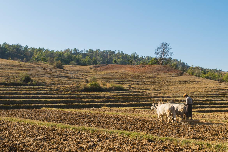 Dans les campagnes birmanes