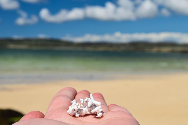 Coraux, sable blanc et eau turquoise, mais sommes-nous vraiment en Irlande?