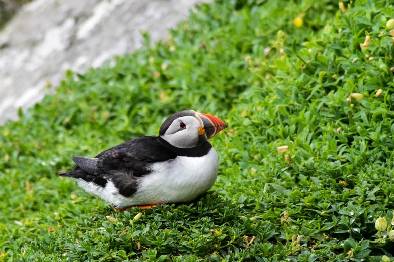 Skellig Island - Ireland