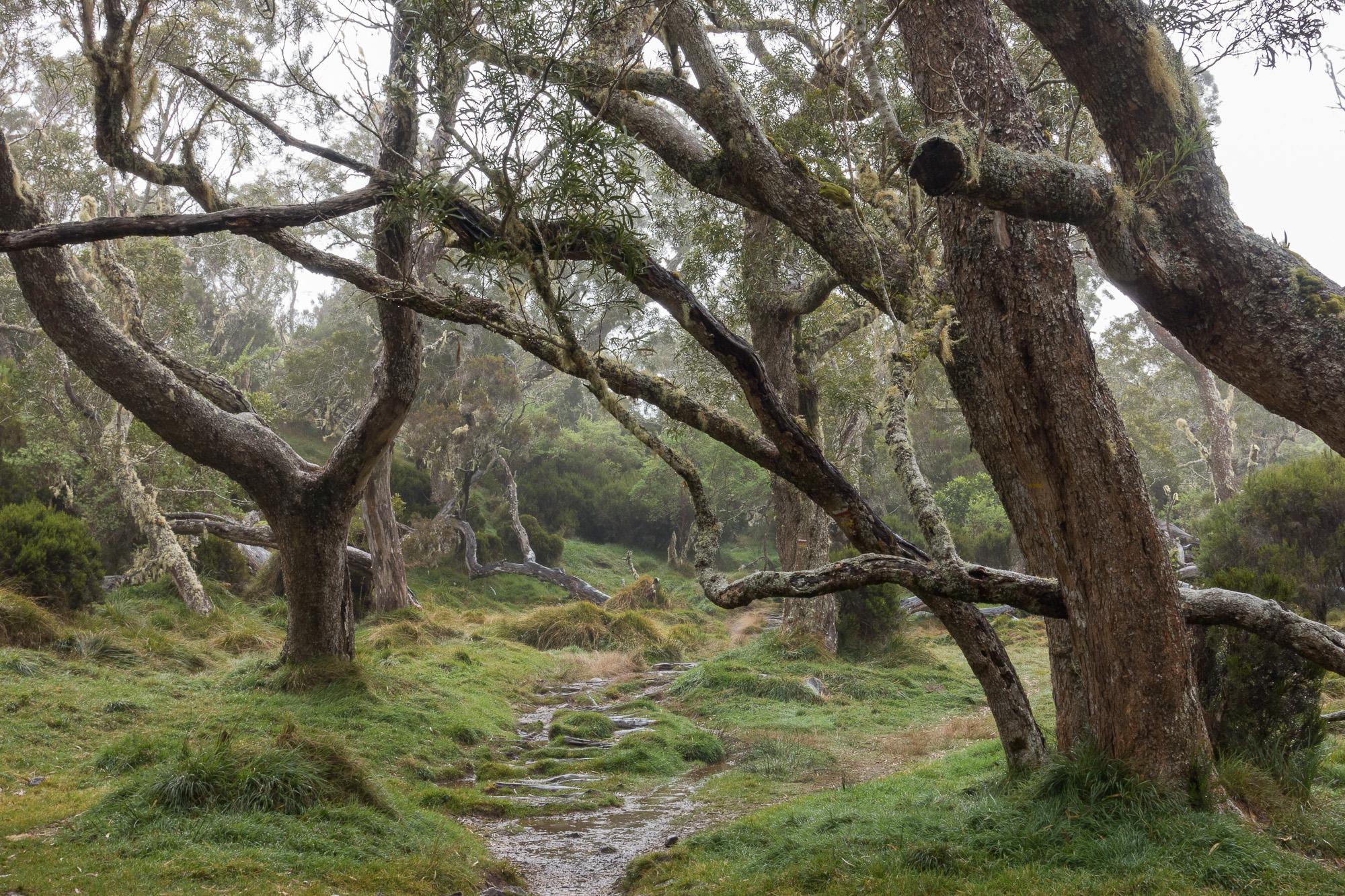 Forêt de Tamarin
