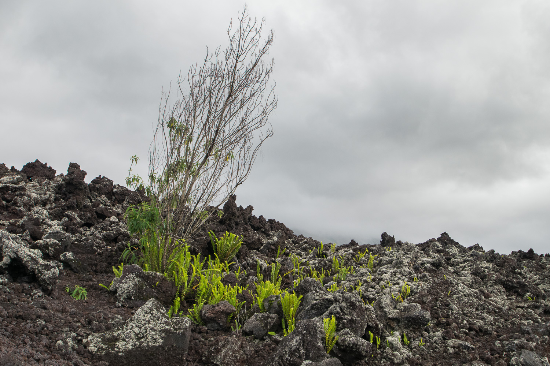 Route des Laves, La Réunion