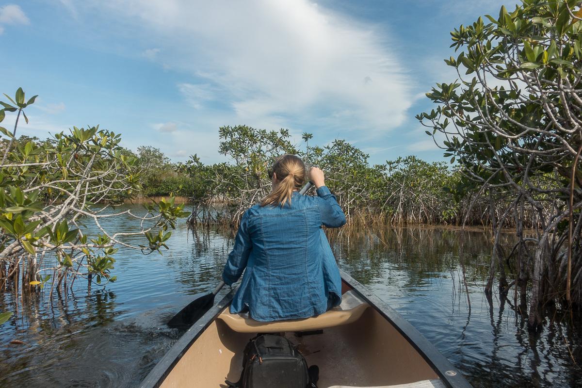 Canoë au cœur des Everglades, Floride
