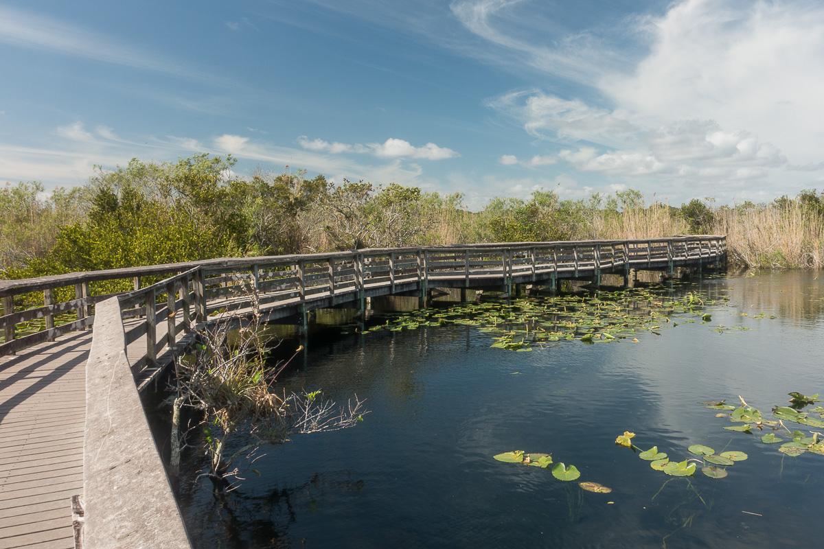 Anhinga Trail, Everglades, Floride