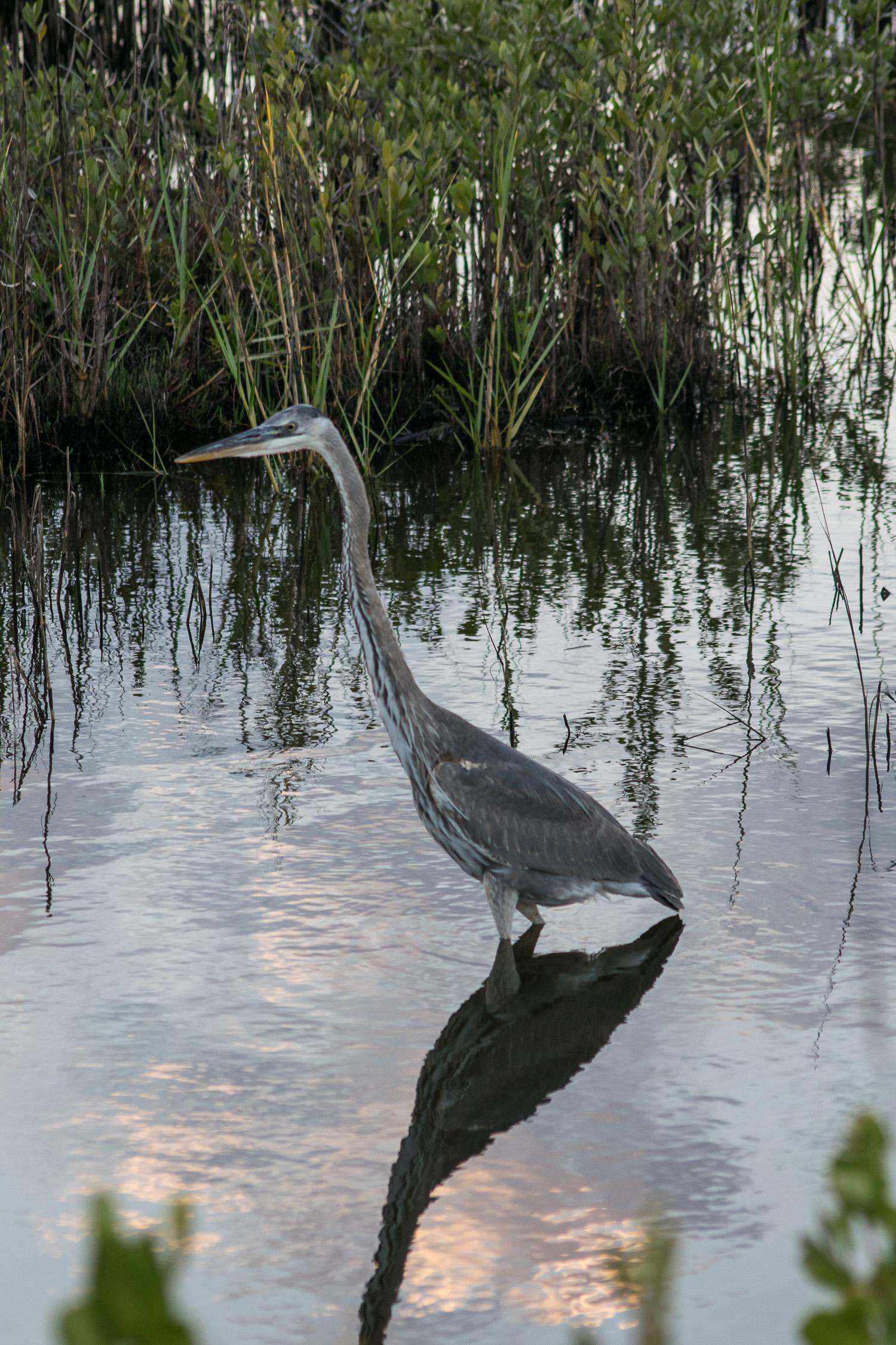 Merrit Island, Florida