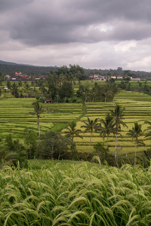 Rizières de Jatiluwih, patrimoine culturel de l'Unesco, Bali