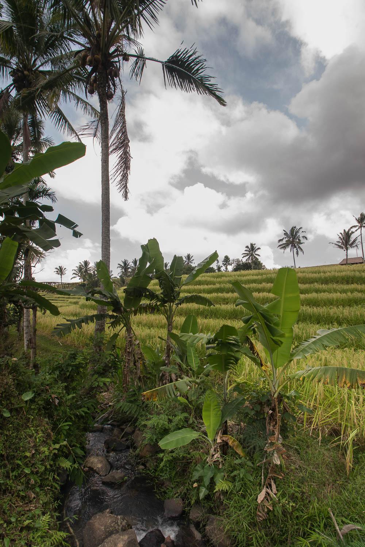 Rizières des Jatiluwih, Bali