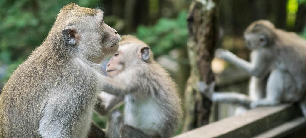 Que faire à Ubud ? Bali